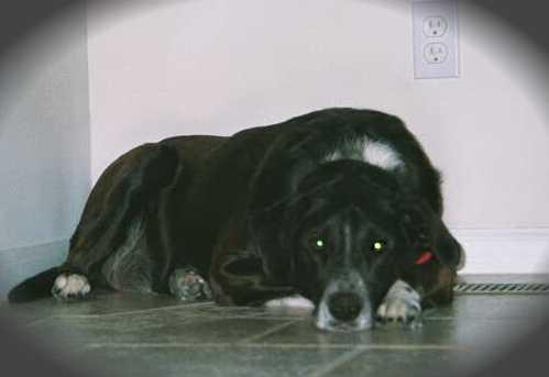Kenn-jiggly dog